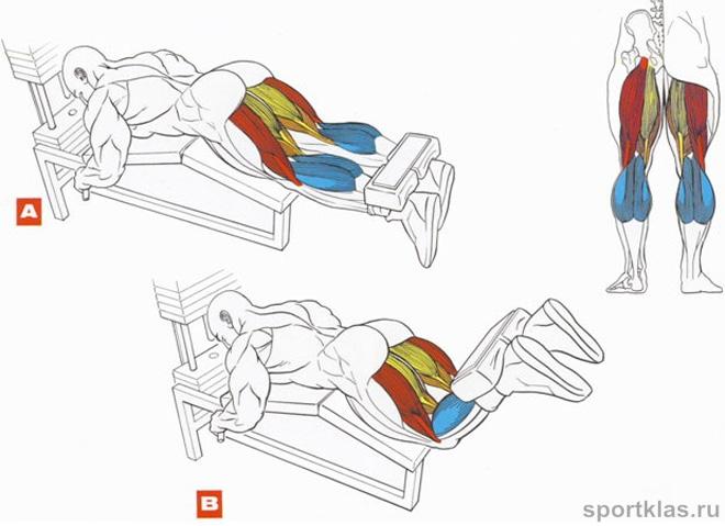 Сгибание ног лежа на тренажере